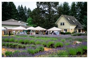 Lavender 2015-12