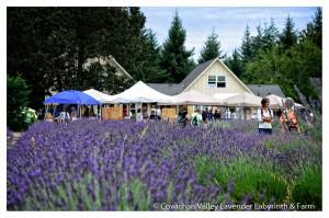 Lavender 2015-22