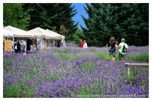 Lavender 2015-25
